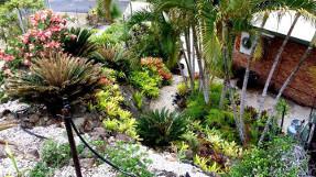 bromeliad_garden_path_top